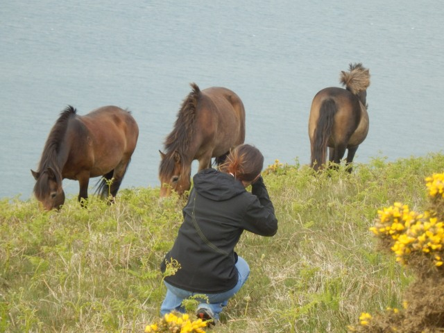 Experience Exmoor - an Exmoor Pony Photo Safari