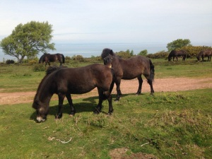 North Hill Mares (2)